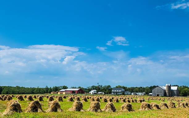 Haystacks Drying On A Farm Wall Art