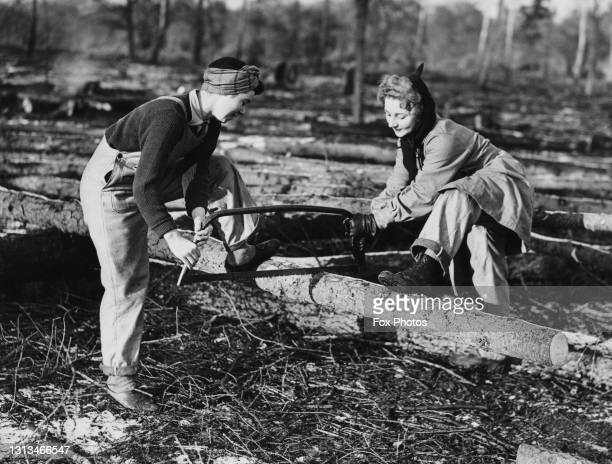 Haywood and P Phillips, members of the Women's Timber Corps of the Women's Land Army at work sawing logs during a training course on 8th January 1943...