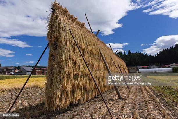Hazakake ( Stand to hang out rice )