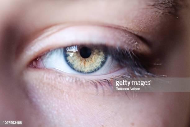 hazel eye with thick eyelashes - occhi nocciola foto e immagini stock