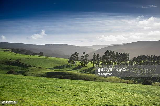 hazy afternoon fields in kaihu, new zealand - northland new zealand stock pictures, royalty-free photos & images