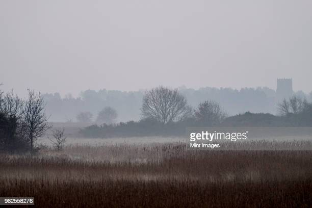 hazy landscape with reeds and trees and a crenelated tower in the distance. - east anglia stock pictures, royalty-free photos & images