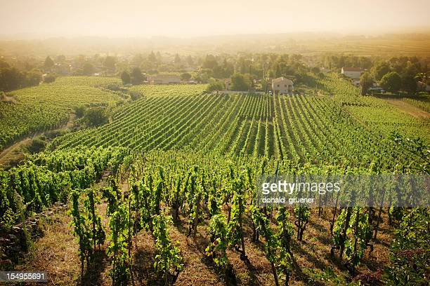 hazy vineyard morning - rhone stock pictures, royalty-free photos & images