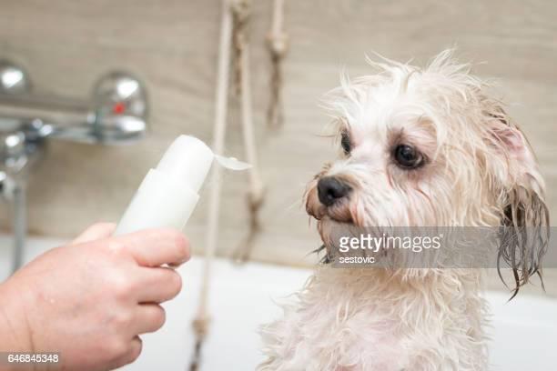 Il ne veut pas une douche