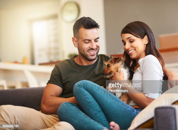 he gets all our love and attention - monogamous animal behavior stock photos and pictures