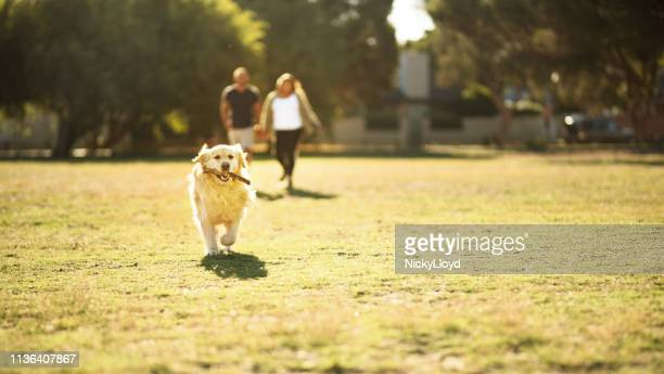 he loves playing fetch - off leash dog park stock pictures, royalty-free photos & images