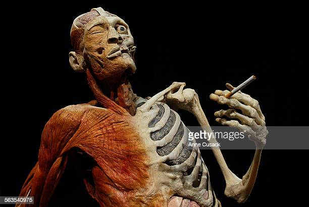 he smoker His black lungs can be seen behind his rib cageBody Worlds is The Anatomical Exhibition of Real Human Bodies which is at the Science Center...