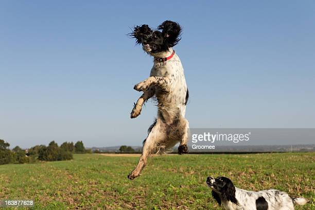 head and shoulders above the rest - animal ear stock photos and pictures