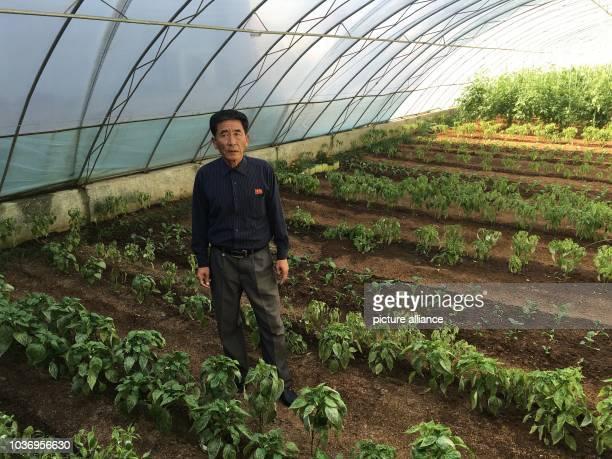Head engineer Yo Yong Ponn at an agricultural pilot project north of Pyongyang North Korea 12 October 2015 The model farm demonstrates North Korea's...
