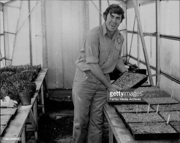 Head gardener Ian StroemHansen in Taronga Zoo's nursery September 10 1979