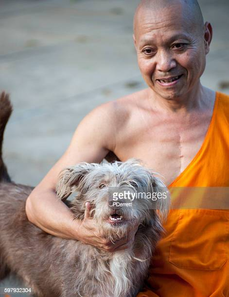 head monk with his dog in luang prabang temple,laos. - heart surgery scar stock photos and pictures