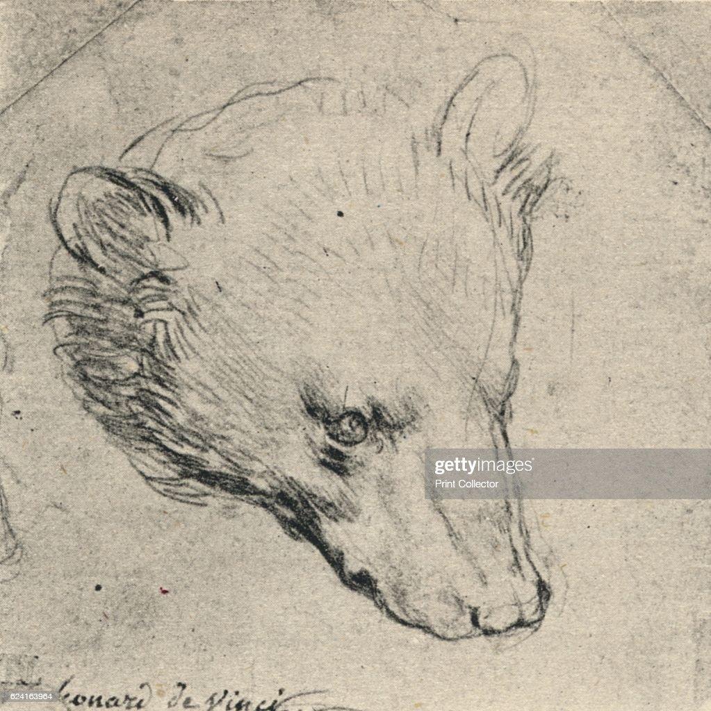 Schön Leonardo Da Vinci Skizzen Anatomie Zeitgenössisch - Anatomie ...