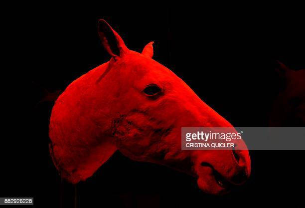 A head of a horse is on display at the 'Casino de la Exposicion' cultural center in Seville on November 30 on the eve of the opening of the...