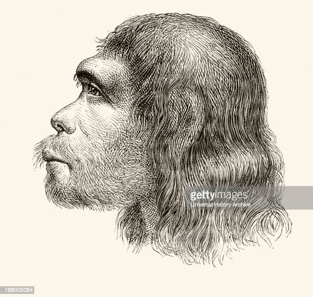 Head Of A Neanderthal Man. Illustration From A 19Th Century Reconstruction. From Nuestro Siglo, Published Barcelona 1883.