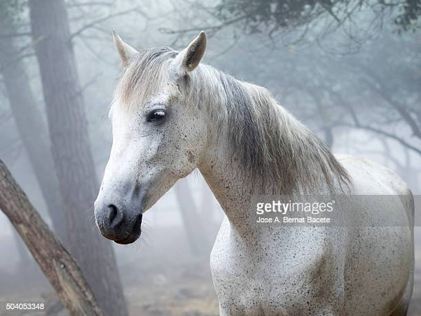 Head of a white horse outdoors between the fog