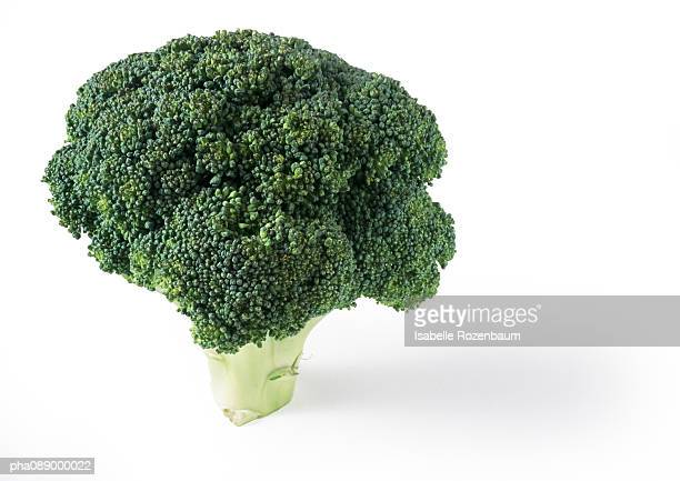 Head of broccoli standing upright, close-up