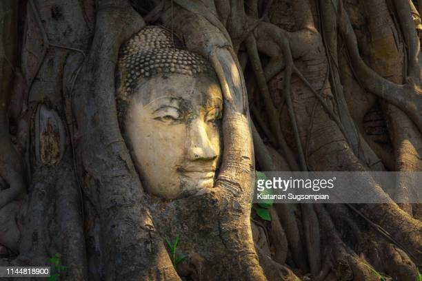 head of buddha statue in the roots of banyan tree at wat mahathat (temple of the great relics), ayutthaya, thailand - angkor stock photos and pictures