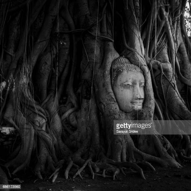 Head of Buddha statue in the tree roots at Ayutthaya, Thailand.