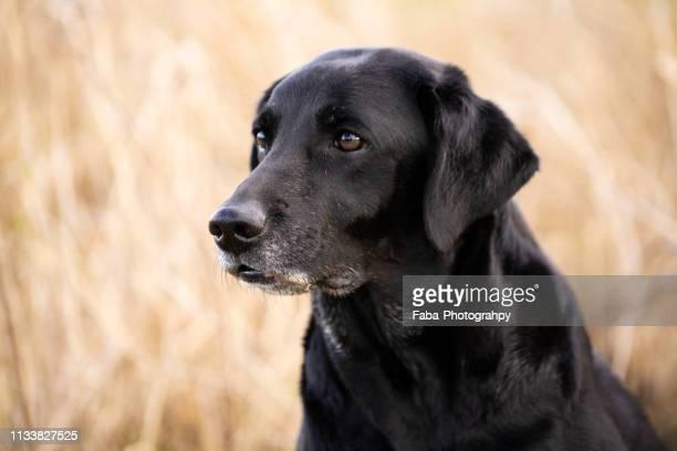 Head Of Dog