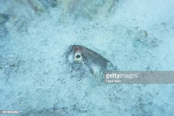 head of fish freeze in the ice - crushed ice stock pictures, royalty-free photos & images