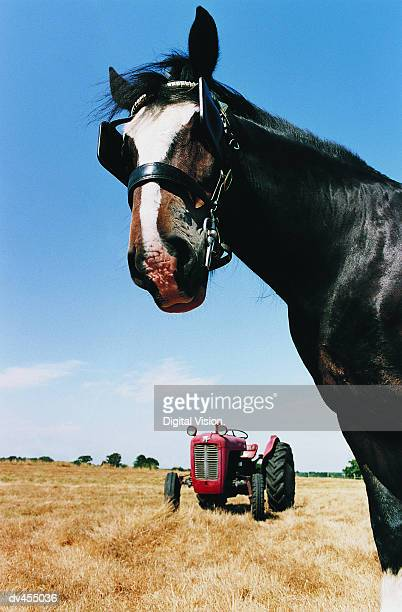 Head of Horse with Tractor in Background