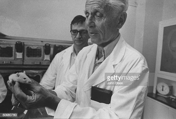 Head of Institute of Exprimmental Research and Surgery Dr Hans Selye inspecting a lab animal during an experiment