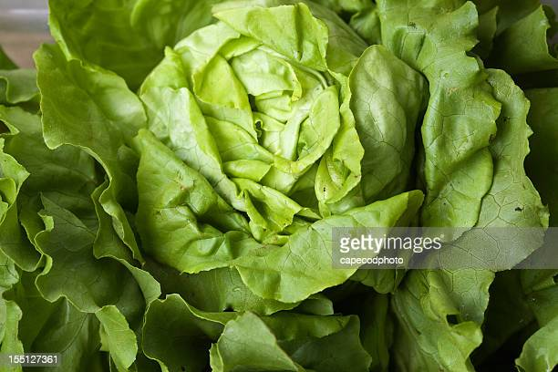 head of lettuce - leaf lettuce stock pictures, royalty-free photos & images