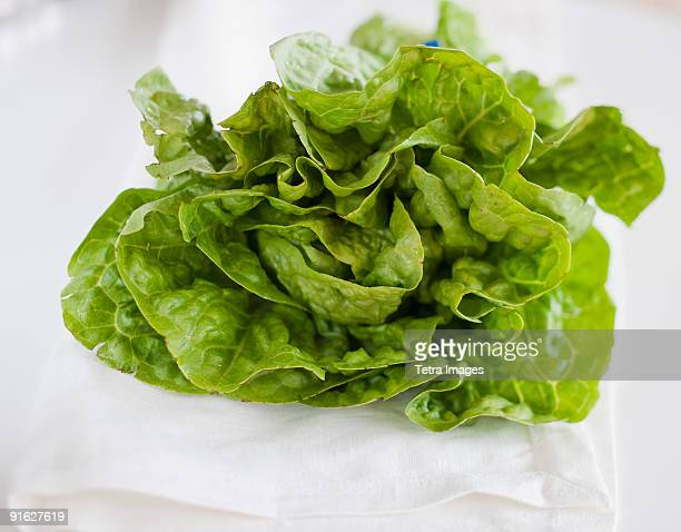 A head of lettuce