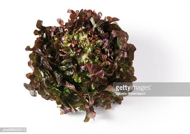 Head of red leaf lettuce, top view, close-up
