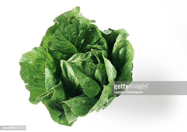 Head of romaine lettuce, top view, close-up