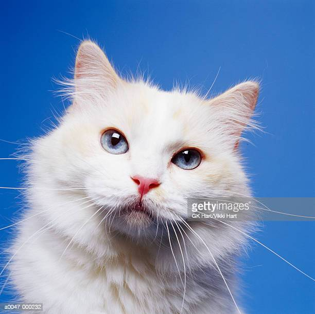 head of white cat - feline stock pictures, royalty-free photos & images