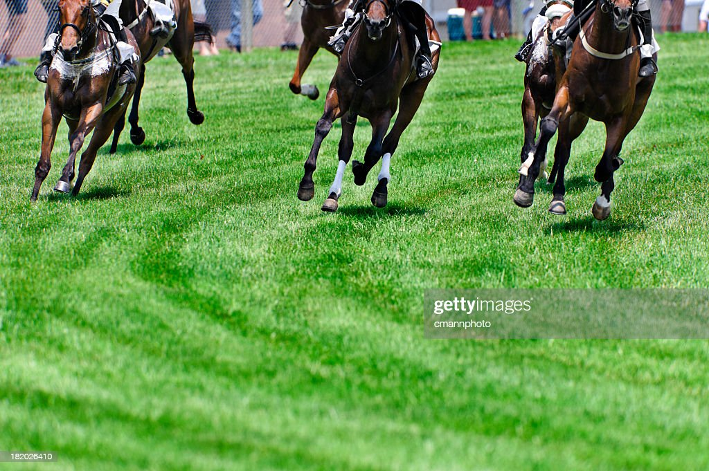 Head On Horse Racing on turf as they round a corner : Stock Photo