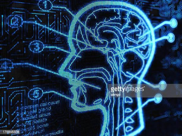 ヘッド - 人体図 ストックフォトと画像