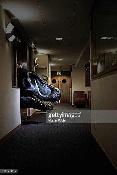 t-rex head poking into office  corridor - t rex stock-fotos und bilder