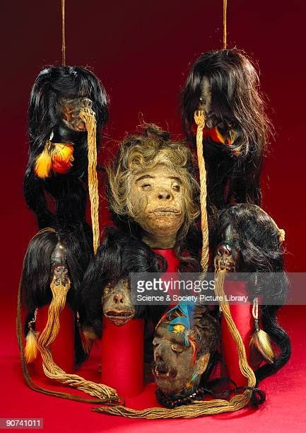 Head shrinking is a custom practised by several tribes in South America notably the Jivaro of southern Ecuador They believe that if an enemy is...