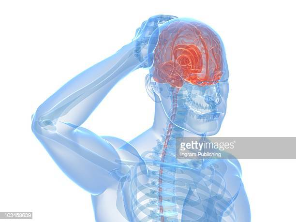 headache - blood vessels stock pictures, royalty-free photos & images