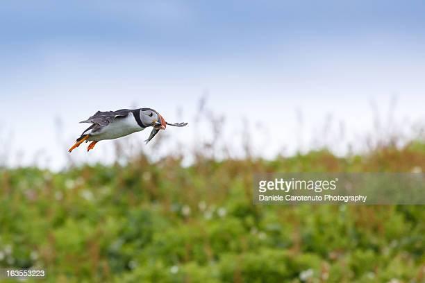 Heading nest