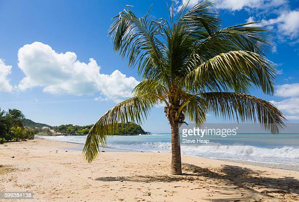 headland off friar's or friars bay off caribbean island of st martin or sint maarten - bay of water stock pictures, royalty-free photos & images