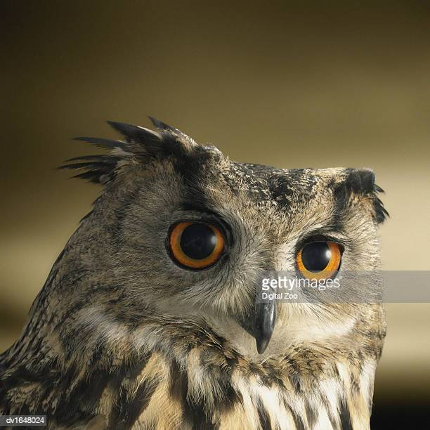 Headshot of an Eagle Owl