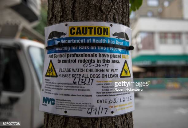 A health department notice is tied above the garbage ripped open by rats sits in front of Chipotle's restaurant on Court Street June 16 2017 in...