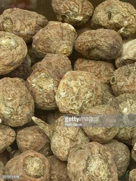 health - maca plant stock photos and pictures