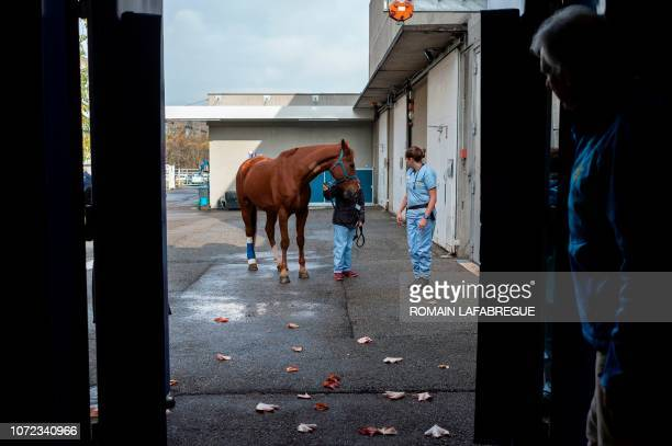Health staff members of the equine clinical unit 'Clinequine' lead a horse to a medical box before a surgery on November 20 in MarcyL'Etoile near...