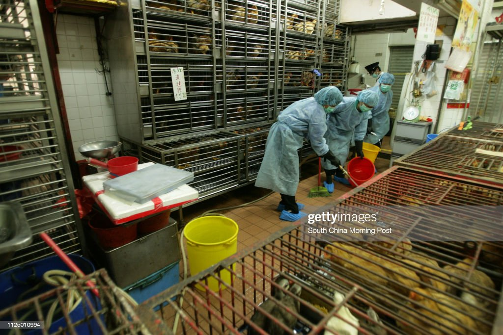 Health, Welfare and Food workers cleaning chicken stalls in
