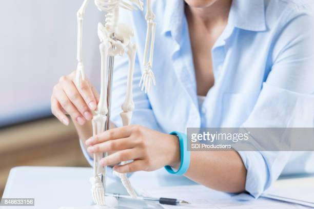 Healthcare professional examines skeletal system model
