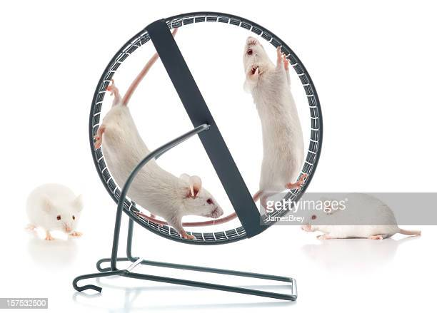 Healthy Athletic White Mice Working-Out At The Mouse Wheel Gym