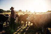 Healthy cattle equals a healthy farm
