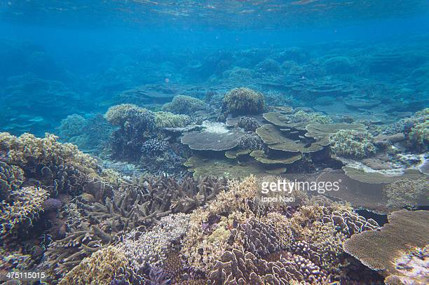 Healthy coral reef and clear water