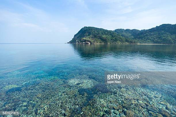 healthy coral reef in clear water from above - 潟湖 ストックフォトと画像