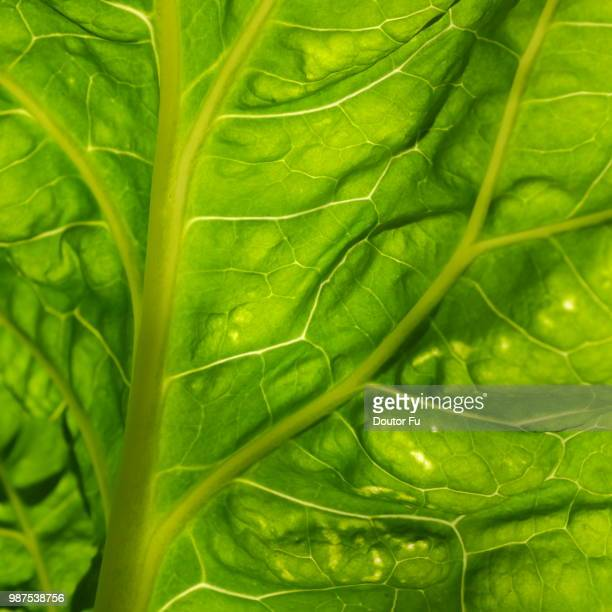 healthy green lines - doutor stock photos and pictures