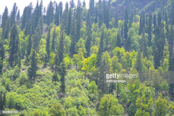 Healthy green trees in forest